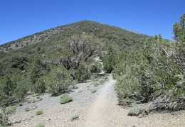 Day 10: Hiking Wildrose Peak, Death Valley National Park