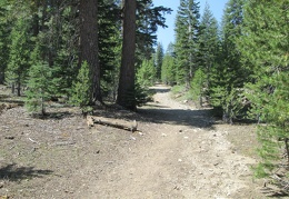 The start of the trail leading to Emma Lake looks like an old road