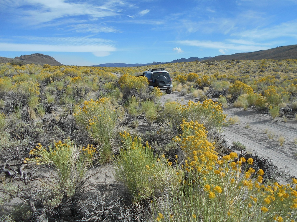 I turn around and drive back down across the fields of rabbitbrush
