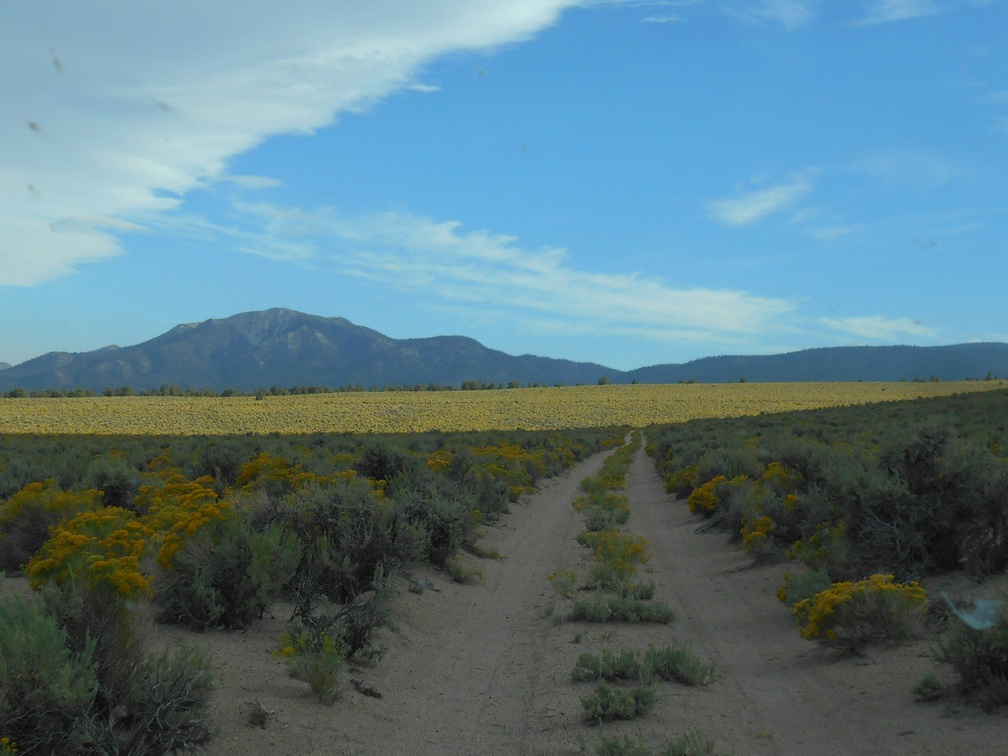 Cloud cover casts a shadow across the fields of yellow rabbitbrush