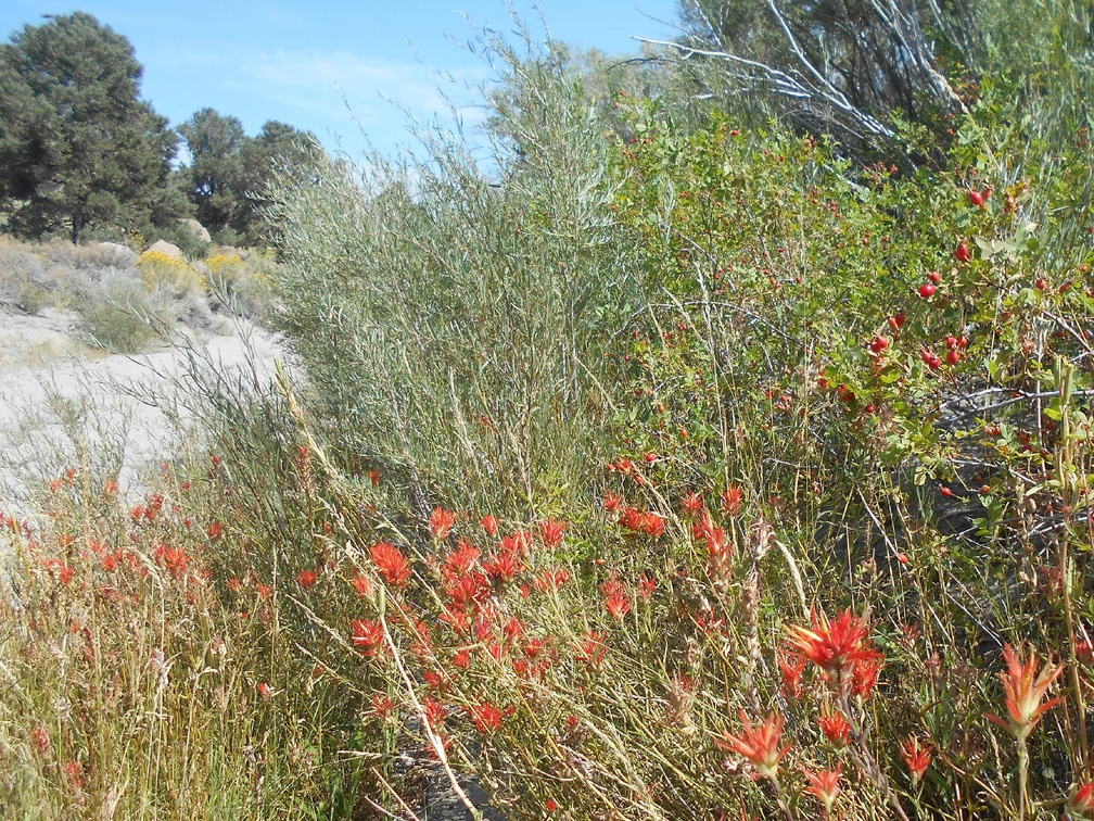 This looks like some kind of really big Indian paintbrush growing along the road