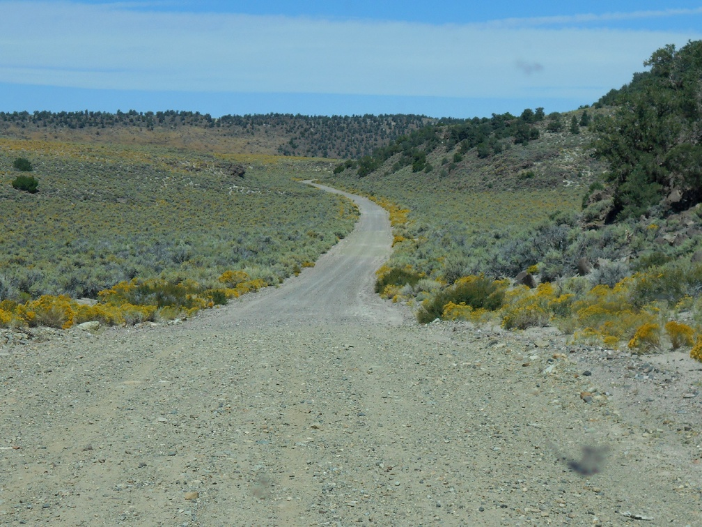 Further up the road, the sagebrush almost looks blue against the yellow rabbitbrush flowers