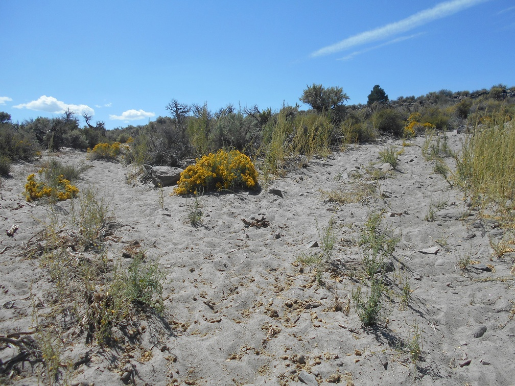Yes, this is a fork in the old road, divided by a rabbitbrush bush