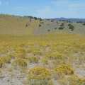 Yellow rabbitbrush blooms on the left side of that hill, which apparently burned recently