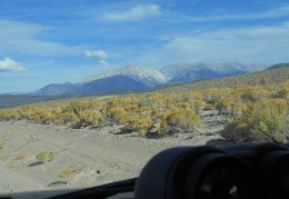 Back on Hwy 120, I look across fields of rabbitbrush to the White Mountains