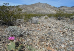 A couple of cactus blooms contrast with the earthy landscape