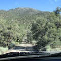 So many pinon pine trees line the road into Papoose Flat