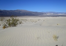 I walk over well-packed sand on the edge of the Eureka Dunes field