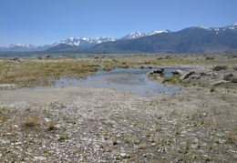 This part of the north side of Mono Lake almost looks marshy