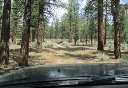 My afternoon continues with a drive through Inyo National Forest